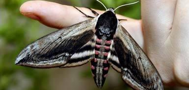 Moth_1_170109a