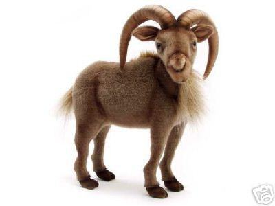 Hansa_goat